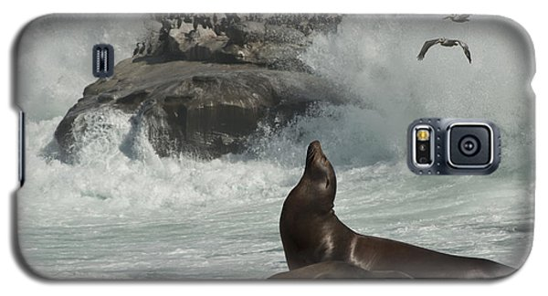 Lajolla Surf N Nature Preserve Galaxy S5 Case by Daniel Hebard