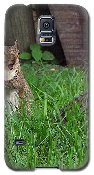 Galaxy S5 Case featuring the photograph Lake Howard Squirrel 000 by Chris Mercer