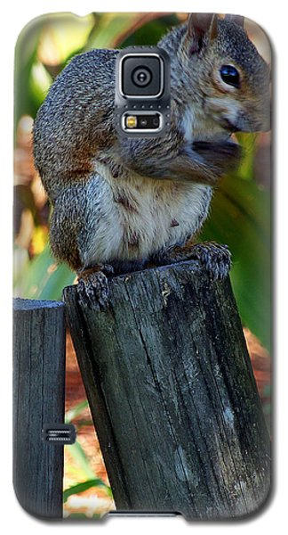 Galaxy S5 Case featuring the photograph Lake Howard Squirrel 019 by Chris Mercer