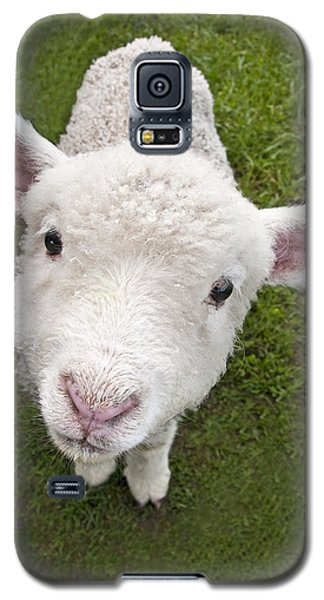Galaxy S5 Case featuring the photograph Lamb by Dennis Cox WorldViews