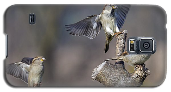 Landing Perch Galaxy S5 Case by David Lester