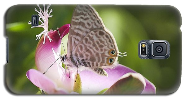 Lang's Short-tailed Blue II Galaxy S5 Case