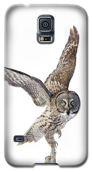 Lapland Owl On White Galaxy S5 Case by Mircea Costina Photography
