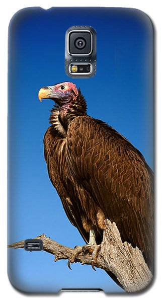 Lappetfaced Vulture Against Blue Sky Galaxy S5 Case