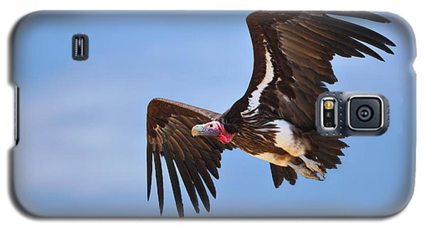 Lappetfaced Vulture Galaxy S5 Case