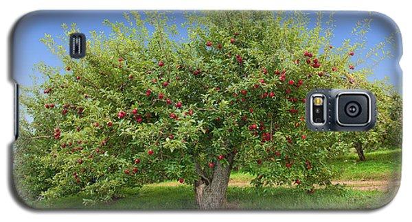 Large Apple Tree Galaxy S5 Case