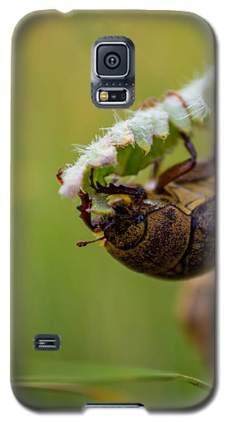Galaxy S5 Case featuring the photograph Large Lunch by Rhys Arithson