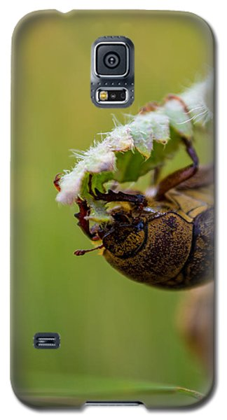 Large Lunch Galaxy S5 Case by Rhys Arithson