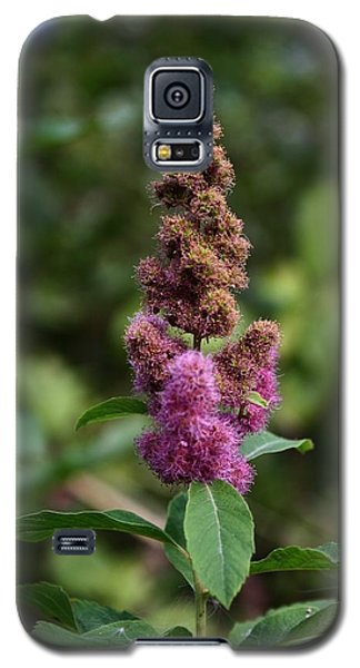 Galaxy S5 Case featuring the photograph Last Alpine Flower by Amanda Holmes Tzafrir