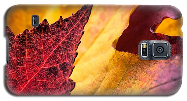 Galaxy S5 Case featuring the photograph Last Days Of Fall by Crystal Hoeveler