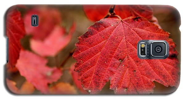 Last Fall Colors Galaxy S5 Case