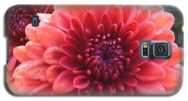 Galaxy S5 Case featuring the photograph Last Of The Summer by Denyse Duhaime