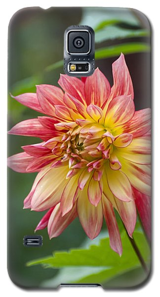 Late Bloomer Galaxy S5 Case
