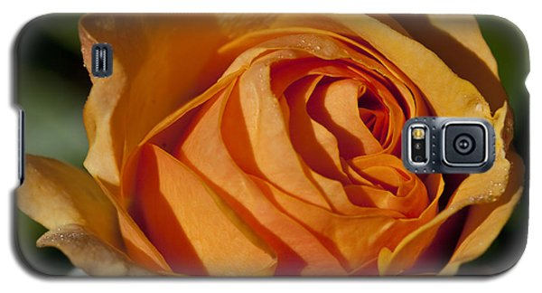 Late Rose Galaxy S5 Case