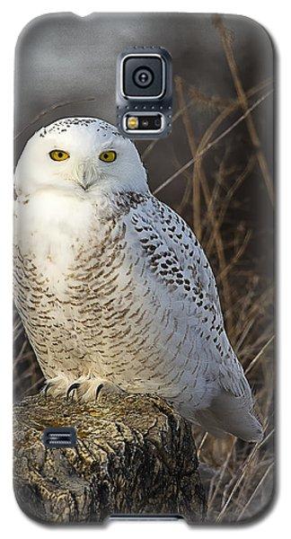 Late Season Snowy Owl Galaxy S5 Case