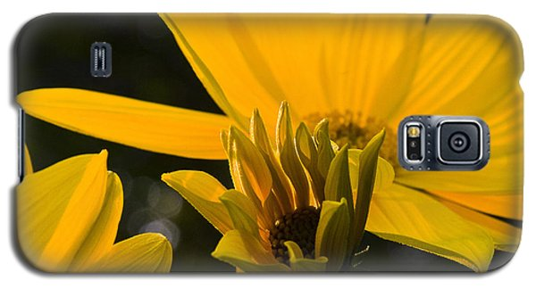 Galaxy S5 Case featuring the photograph Late Summer Blooms by Michael Friedman