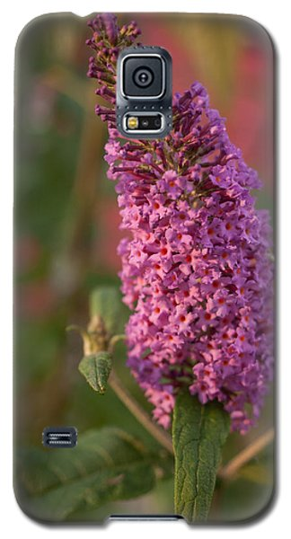 Late Summer Wildflowers Galaxy S5 Case