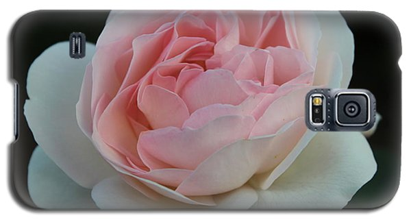 Galaxy S5 Case featuring the photograph Late Summer's Rose by Patricia Hiltz