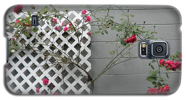 Galaxy S5 Case featuring the photograph Lattice Smell The Roses by Suzanne McKay