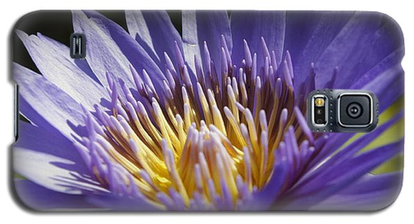 Galaxy S5 Case featuring the photograph Lavendar Lily by Laurie Perry