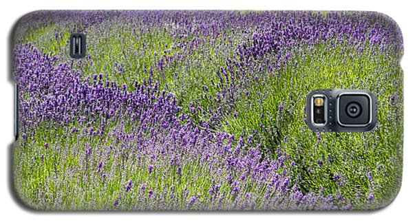 Lavender Day Galaxy S5 Case by Kathy Bassett