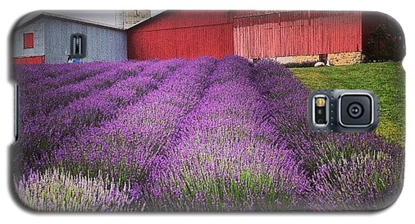 Lavender Farm Landscape Galaxy S5 Case by Christy Beckwith