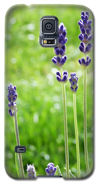 Lavender Galaxy S5 Case