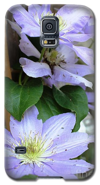 Galaxy S5 Case featuring the photograph Lavender Star by Judy Palkimas