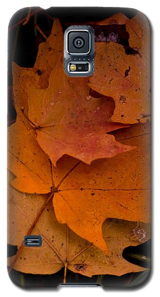 Galaxy S5 Case featuring the photograph Layering by Haren Images- Kriss Haren