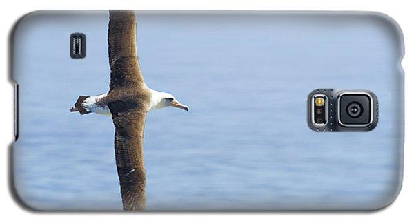 Laysan Albatross No 1 - Kilauea - Kauai - Hawaii Galaxy S5 Case