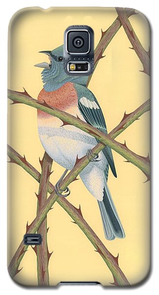 Lazuli Bunting Galaxy S5 Case by Nathan Marcy