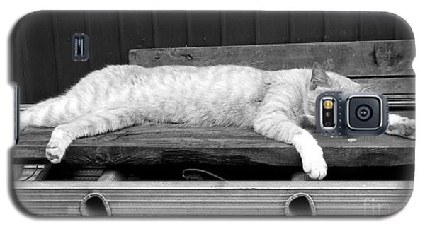 Galaxy S5 Case featuring the photograph Lazy Cat by Andrea Anderegg