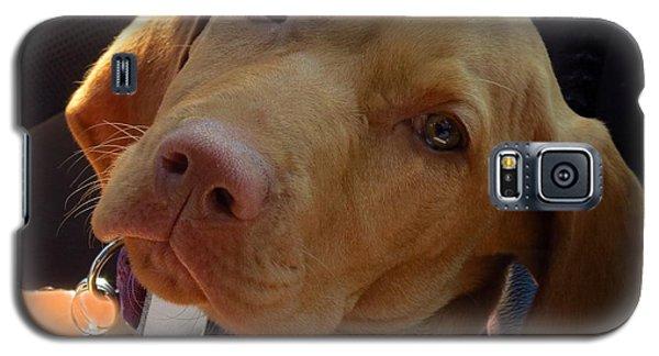 Lazy Dazy Dog Galaxy S5 Case