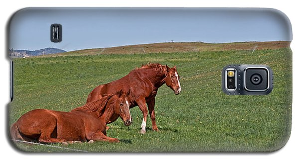 Galaxy S5 Case featuring the photograph Lazy Horses by Valerie Garner