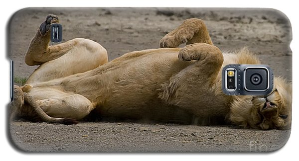 Galaxy S5 Case featuring the photograph Lazy Lion by J L Woody Wooden