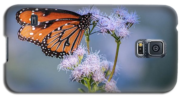8x10 Metal - Queen Butterfly Galaxy S5 Case by Tam Ryan