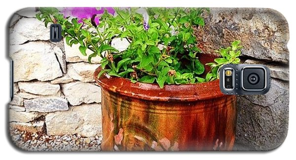 Decorative Galaxy S5 Case - Anduze Flower Pot With Petunias by Cristina Stefan