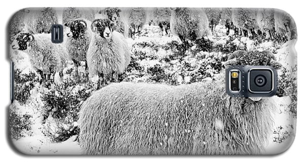 Sheep Galaxy S5 Case - Leader Of The Flock by Janet Burdon