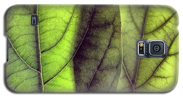 Leaf Abstract Galaxy S5 Case by Christy Beckwith