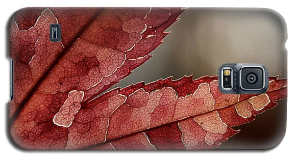 Galaxy S5 Case featuring the photograph Leaf Detail by Kenny Glotfelty