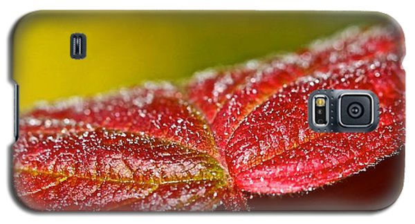 Galaxy S5 Case featuring the photograph Leaf by Michaela Preston