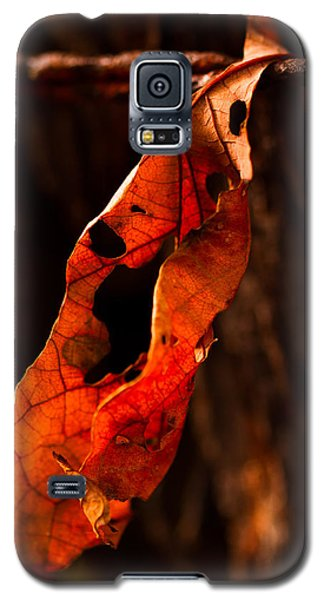 Leaf On A Wire Galaxy S5 Case by Haren Images- Kriss Haren