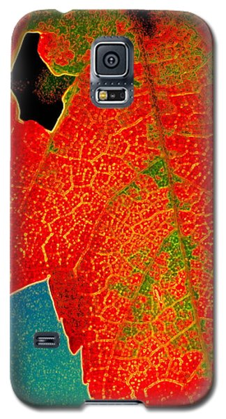 Galaxy S5 Case featuring the photograph Leaf Pop by Kathy Bassett