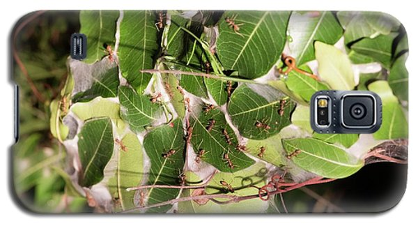Leaf-stitching Ants Making A Nest Galaxy S5 Case by Tony Camacho