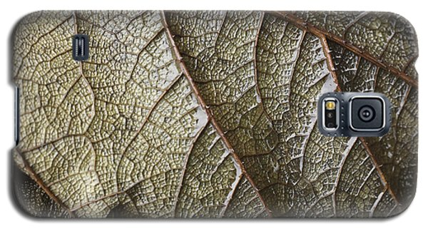 Leaf Vein Abstract Galaxy S5 Case