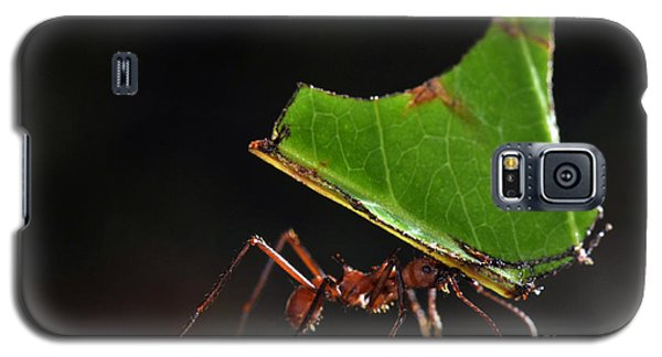 Leafcutter Ant Galaxy S5 Case by Francesco Tomasinelli