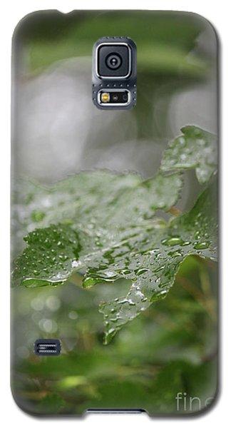 Leafy Raindrops Galaxy S5 Case