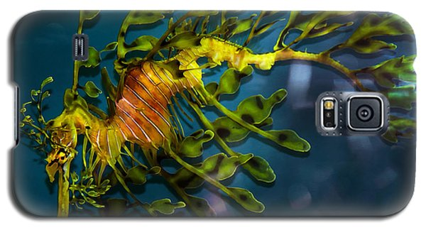 Leafy Sea Dragon Galaxy S5 Case by Artist and Photographer Laura Wrede