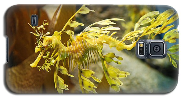 Leafy Sea Dragon Galaxy S5 Case