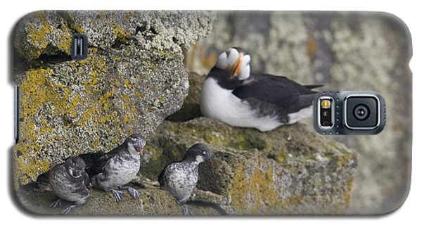 Least Auklets Perched On A Narrow Ledge Galaxy S5 Case by Milo Burcham
